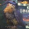 四天王牙獣種モンスター「ガムート」、新鳥竜種モンスター「ホロロホルル」の特徴!【MHX・7/30ファミ通感想後編】